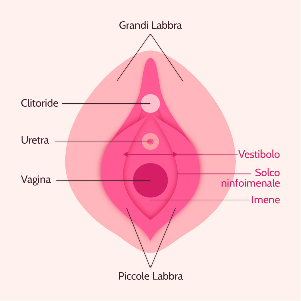 imene vagina hymen